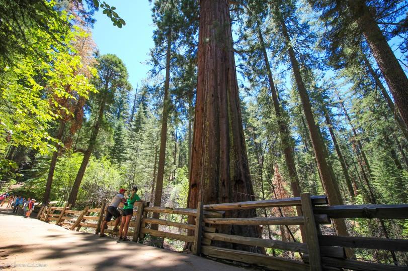 RT2016-Redwoods-1