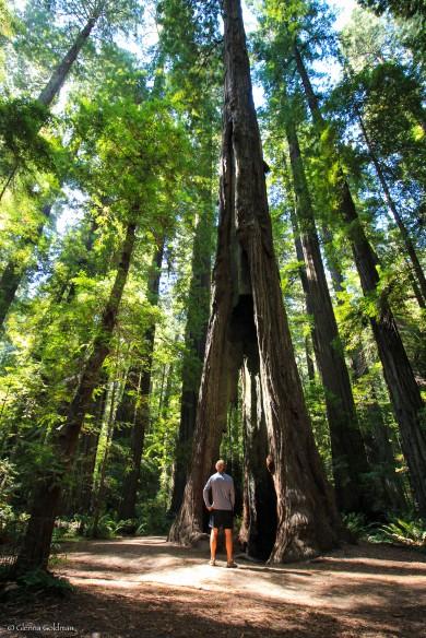 RT2016-Redwoods-9