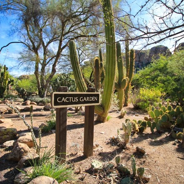 Cactus Garden, Boyce Thompson Arboretum, Arizona