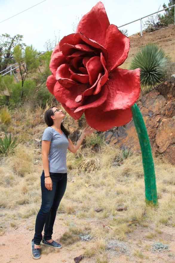 Bisbee Giant Rose
