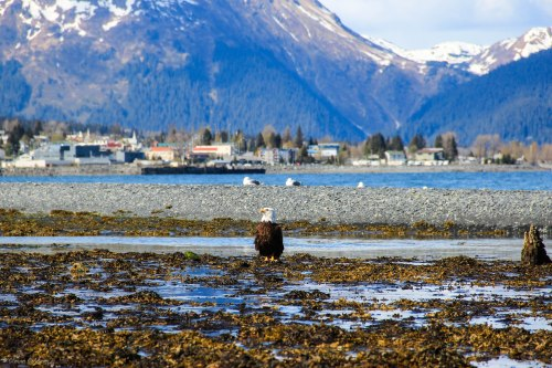 Alaska-77