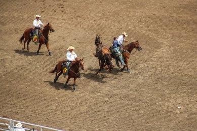 Calgary Stampede Bronco Riding