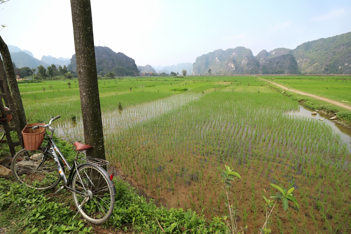 Vietnam-Rice-Paddy-Bike-Ride